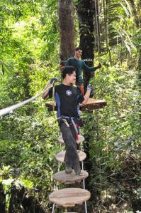 2.jpg treetop
