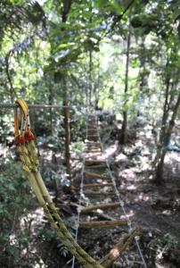 5.jpg treetop.jpg